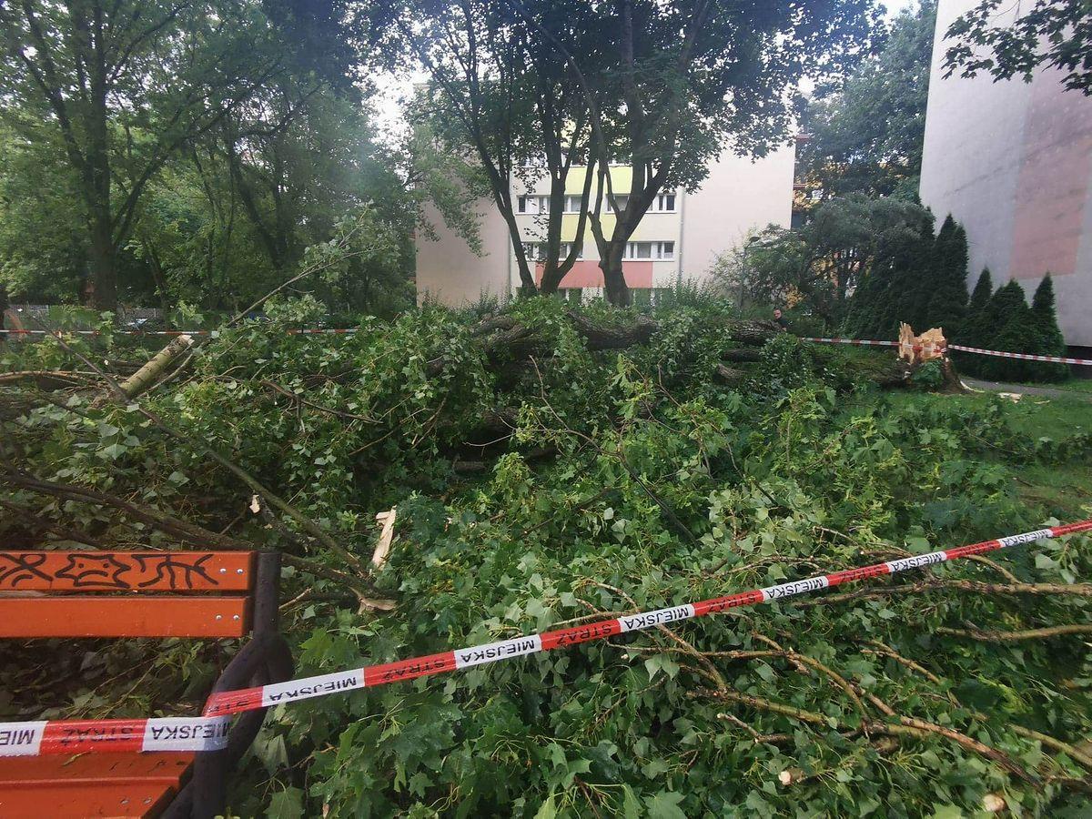 Burza na Ochocie. Połamane drzewo uszkodziło samochody
