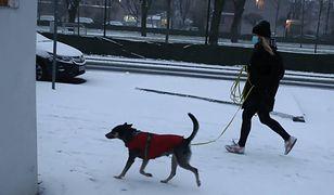 Pogoda w Warszawie w środę 13 stycznia. Zachmurzenie i śnieg