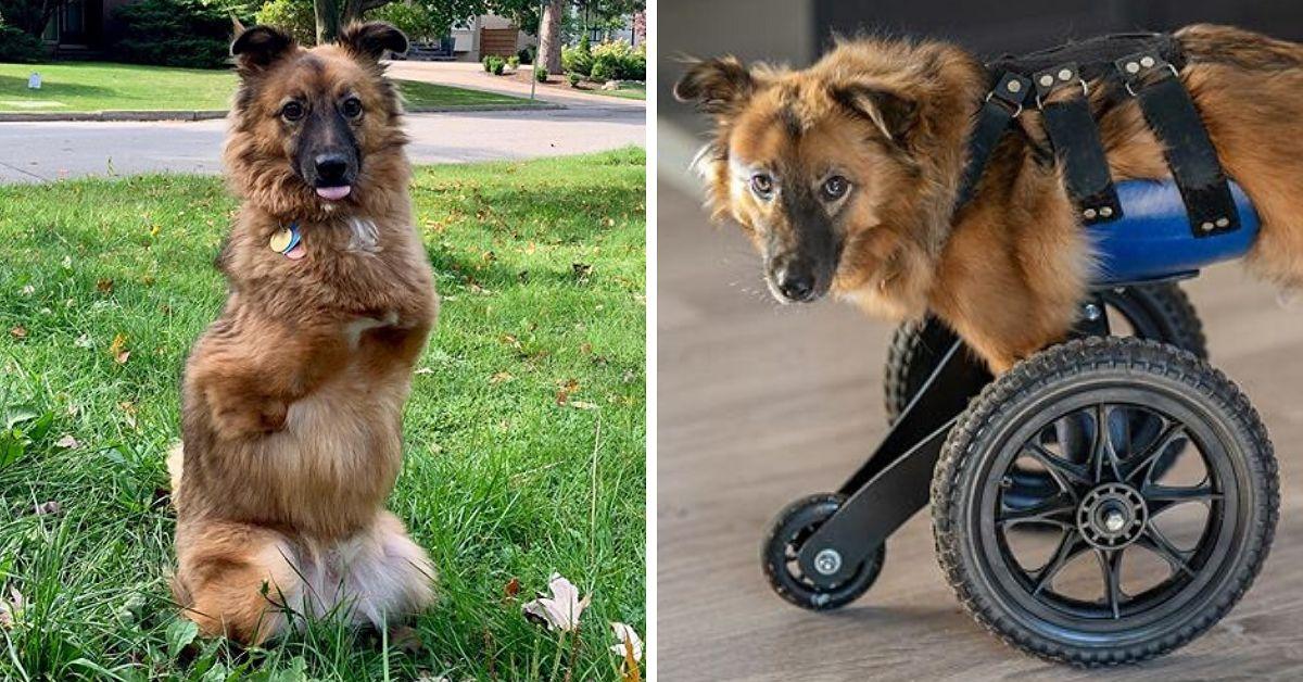 Pies okrutnie okaleczony przez właściciela. Dostał od życia drugą szansę