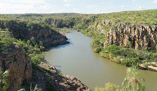 Australia. Zamiast ryby złowił krokodyla