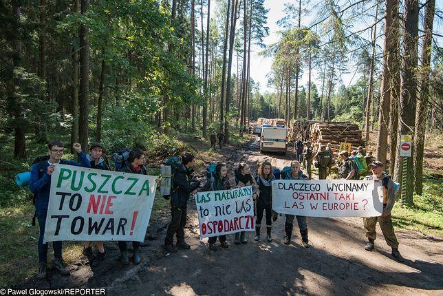 Wycinka Puszczy Białowieskiej. Rok więzienia za napaść na operatora Polsat News