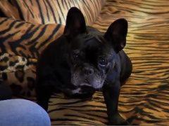 Wolontariuszka działająca na rzecz zwierząt głodziła psa!