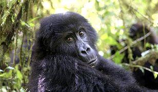 Alarmujący raport WWF. Drastyczny spadek populacji zwierząt na świecie