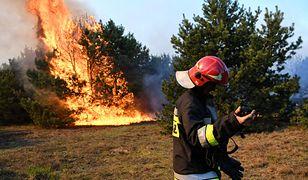 Płonie las pod Bydgoszczą. Strażacy: winne grille i ogniska