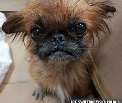 Mundurowi proszą o pomoc w odnalezieniu właściciela psa