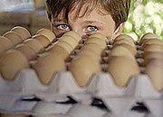 KE rozpoczyna procedury karne za łamanie przepisów o kurach nioskach