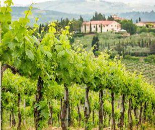 Wielki spór o winnice w Toskanii