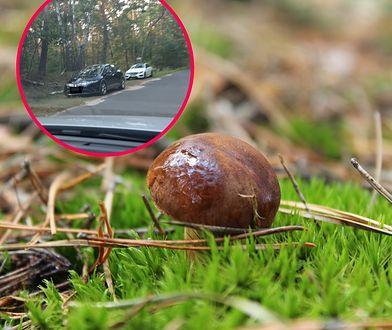 Pani Agata przysłała nam zdjęcia samochodów w Kampinosie, najwyraźniej grzybiarze korzystają z urodzaju, a przecież to  park narodowy.