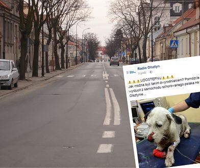 Właściciel wyrzucił psa chorego na raka. Później ktoś potrącił zwierzę
