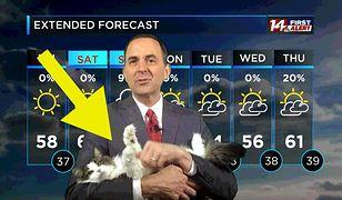 Meteorolog nagrywał prognozę z domu. Jego kot przyniósł mu sławę