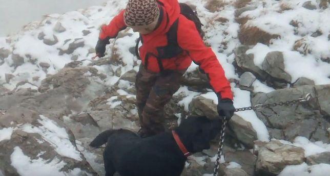 Pies został uratowany przez turystów.