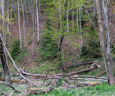 Mazowsze. Zamknięte lasy w województwie mazowieckim. Miejscowości, w których obowiązuje zakaz wstępu
