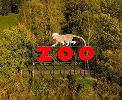 Sensacja w Płocku. Urodziło się jedno z najrzadszych zwierząt świata