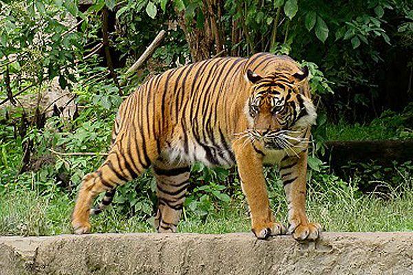 WWF: o połowę mniej dzikich zwierząt niż 40 lat temu