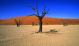 Namibia - Afryka dla początkujących