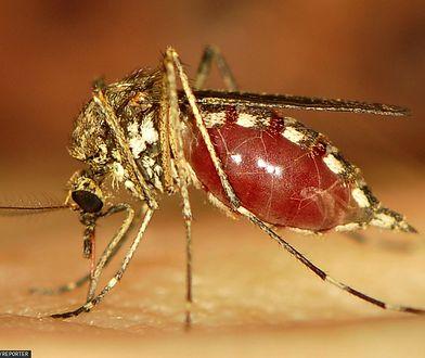 Inwazja groźnych komarów w Europie. Węgrzy mają pomysł