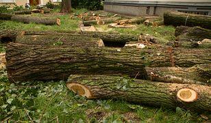 Warszawa. Trwa masowa wycinka zdrowych drzew na Muranowie