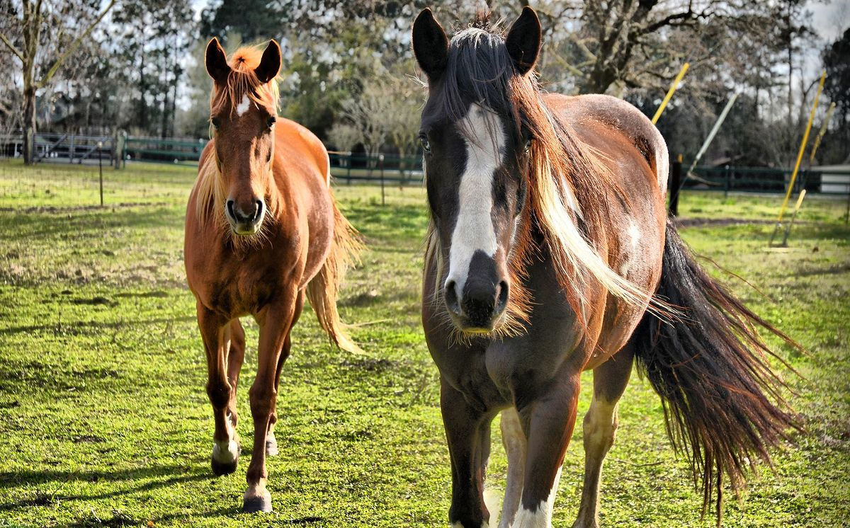 Wypadek na koloniach. Spłoszone konie stratowały dziecko na Dolnym Śląsku