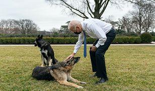 """Joe Biden przekazał smutną wiadomość. Zdechł jego pies Champ. """"Był wiernym kompanem"""""""