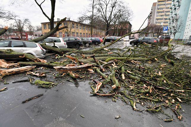 Drzewo runęło na autobus. Silne wiatry w całej Polsce