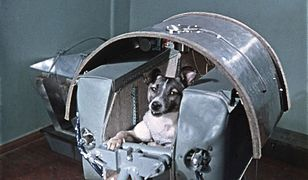 Łajka - pierwszy pies, który okrążył Ziemię