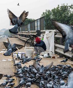Ptasia grypa zabiła nastolatka? Kraj bije na alarm