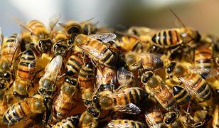 Pszczelarze chcą otrzymywać ekwiwalent finansowy za pracę pszczół
