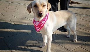 Psy i koty są najczęściej transportowanymi zwierzętami przez Polaków.