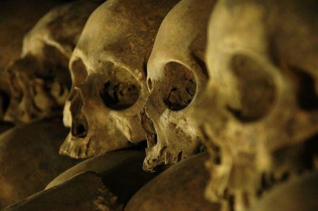 Czaszki odkryte pod podłogą kościoła św. Mikołaja w Gdańsku
