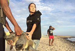 Staż na Wyspach Zielonego Przylądka. Zaopiekujesz się żółwiami