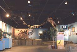 Odkryto nowy gatunek dinozaura. Zaskoczył badaczy przeciwstawnym kciukiem