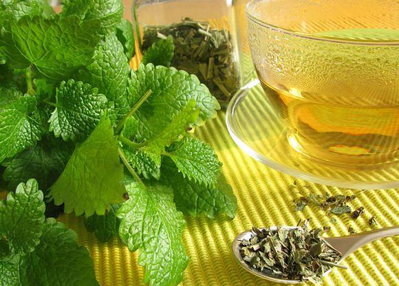 Melisa - zastosowanie, właściwości i działanie zioła
