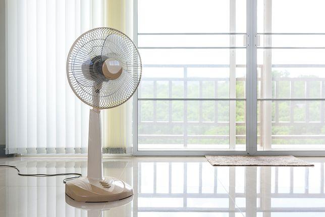 Wentylator lub cyrkulator (ruchomy wiatrak) przyniosą ulgę w upalny dzień