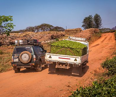 Przejeżdżające ciężarówki wypełnione po brzegi herbatą oznaczały, że do fabryki już niedaleko