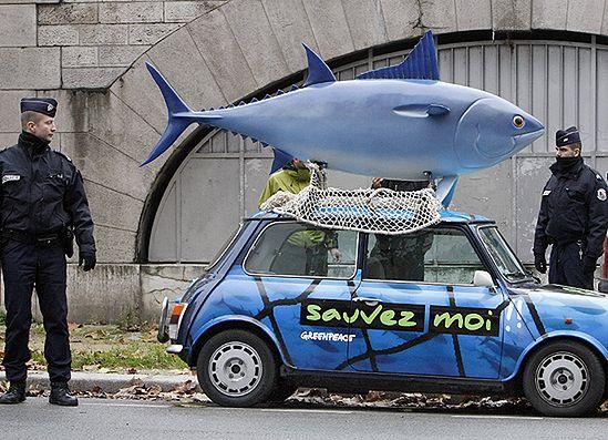 Limity na połów tuńczyka nie satysfakcjonują ekologów