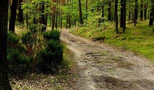 Mieszkaniec Wałbrzycha znalazł w lesie wór monet