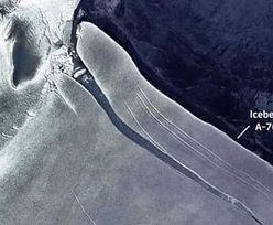 Zobaczyli to dzięki satelicie. Porażające zdjęcie z Antarktydy