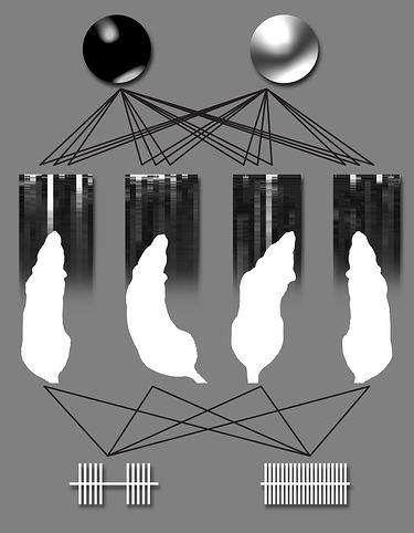 Szczury jako elementy biologicznego komputera (źródło: Duke University)