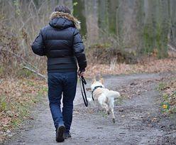 Podatek za psa. Sprawdź, ile musisz zapłacić za czworonoga