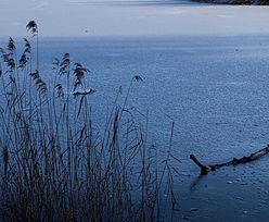 Tragedia w Jeziorze Marianowskim. Utopiło się całe stado