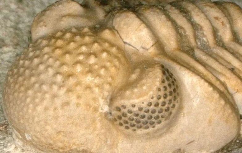 Skamielina przyniosła sensacyjne odkrycie. Tego nie miało żadne zwierzę