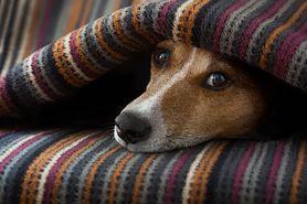 Padaczka u psa: objawy i leczenie