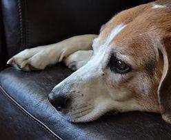 Ktoś truje psy w Łodzi? Mieszkańcy boją się o swoje zwierzęta