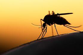 Witaminy odstraszające komary. Dowiedz się, jakie najlepiej stosować (WIDEO)