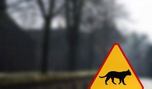 Takie znaki mogą wkrótce stanąć w całej Polsce