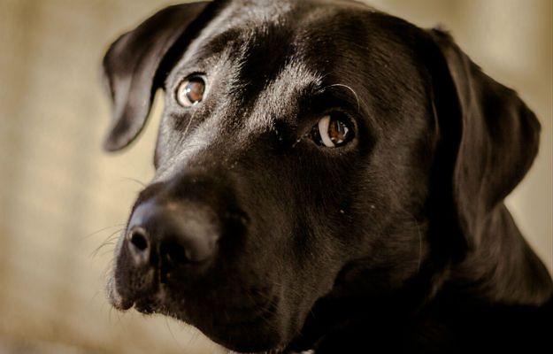 Ktoś strzelał do psa w Piekarach Śląskich. To nie pierwszy przypadek. Policja prosi o pomoc
