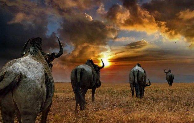 10 miejsc, które musisz zobaczyć w Afryce