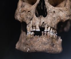 Niesamowite odkrycie w Bułgarii. Najstarsze szczątki człowieka w Europie