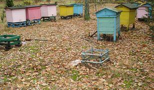 Ukradli ule razem z pszczołami. Policja prosi o pomoc