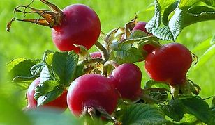 10 roślin, które mają najwięcej witaminy C